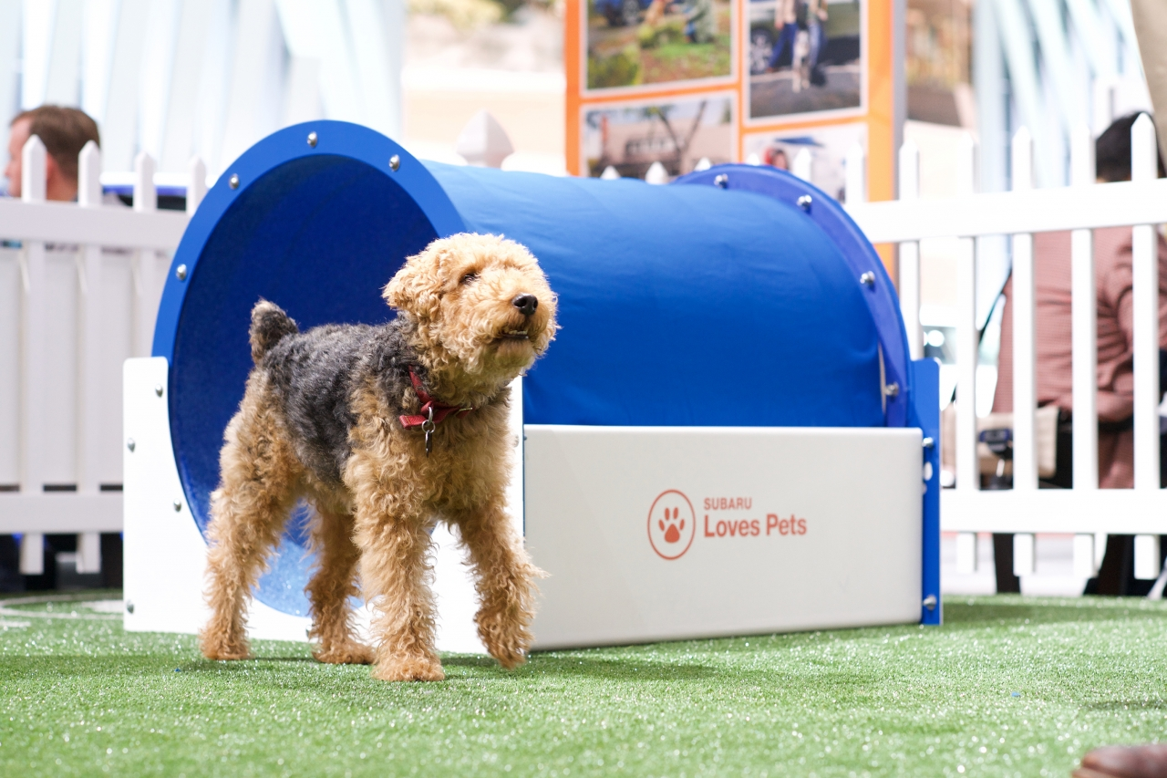Subaru of America Helps Save Lives of Pets in Need