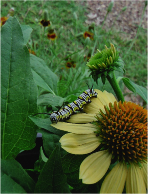 PHOTO GALLERY | #Parks4Pollinators Photo Contest