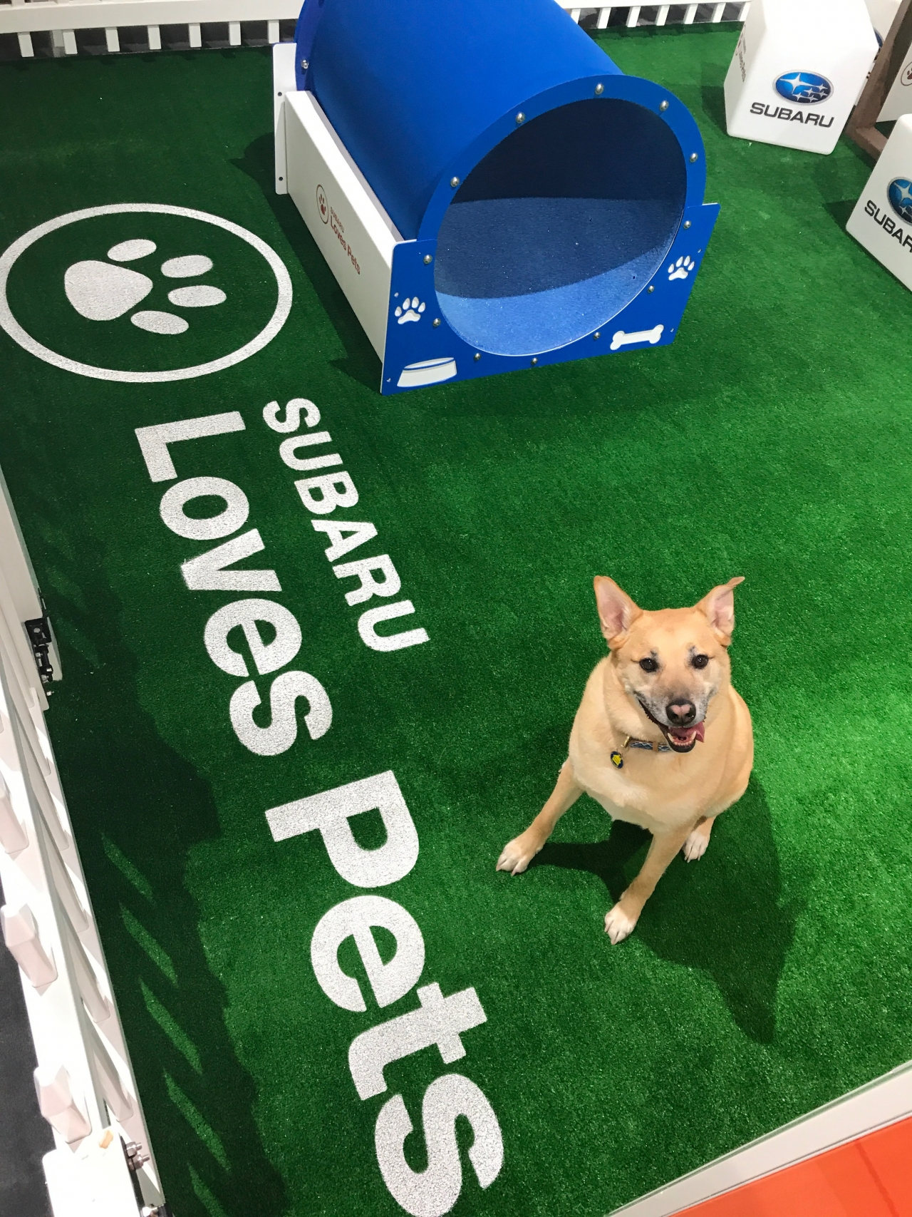 Subaru Hosts Event to Help Pets in Need During 2019