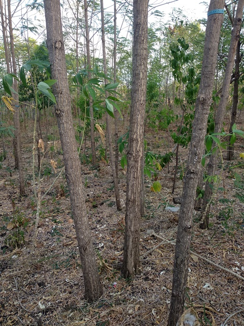 Restoring Degraded Tropical Dryland in Extreme
