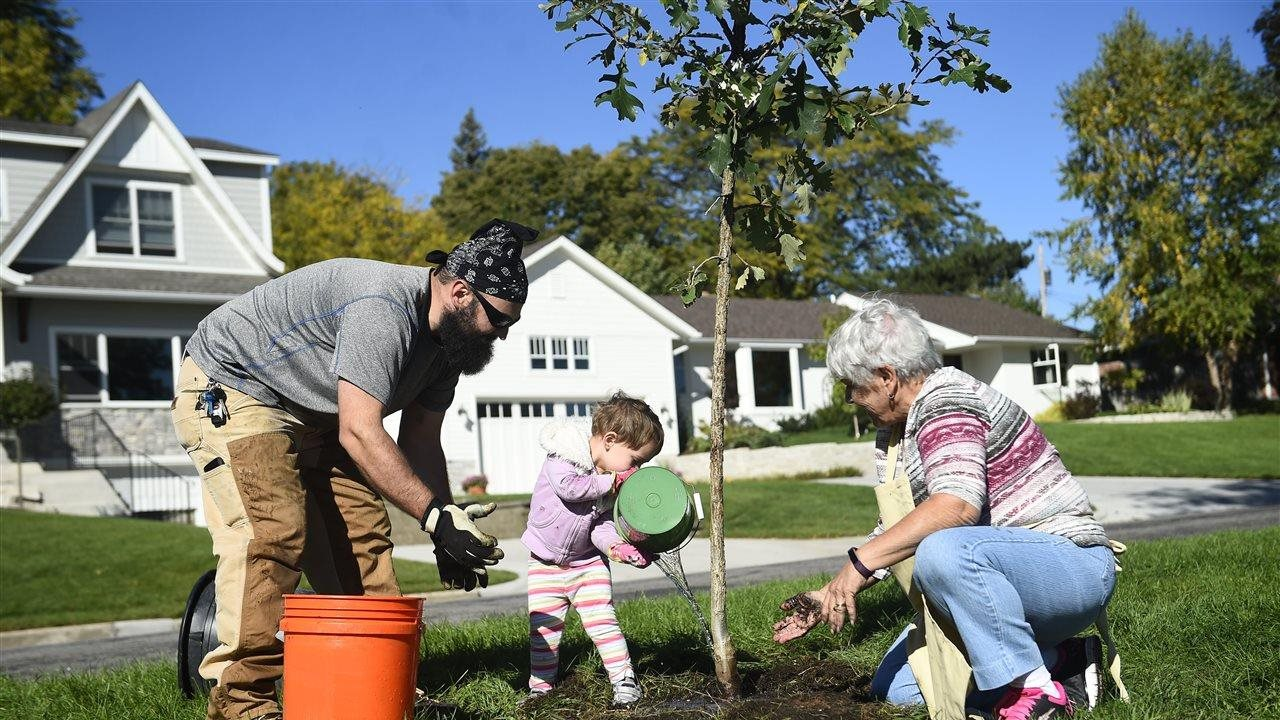Services - Central Arbor Tree Care