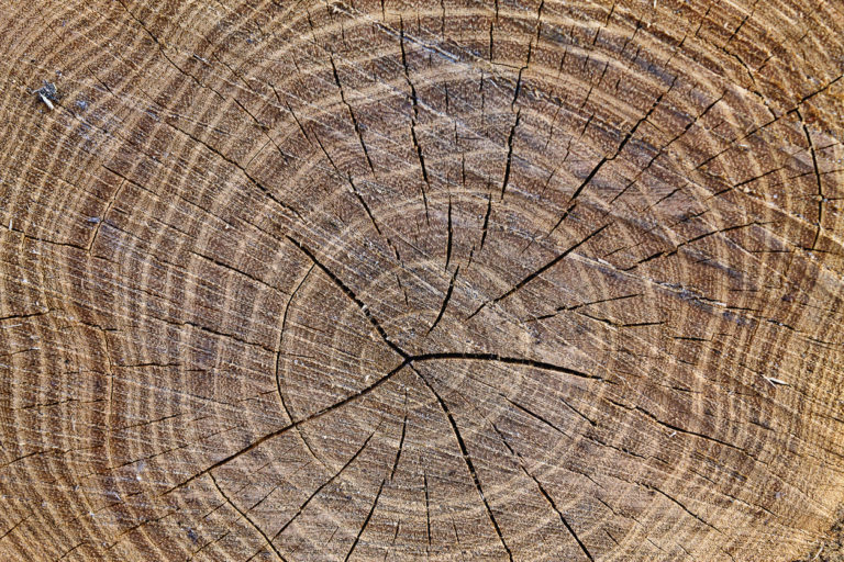 Bristlecone pine tree ring dating dendrochronology 5