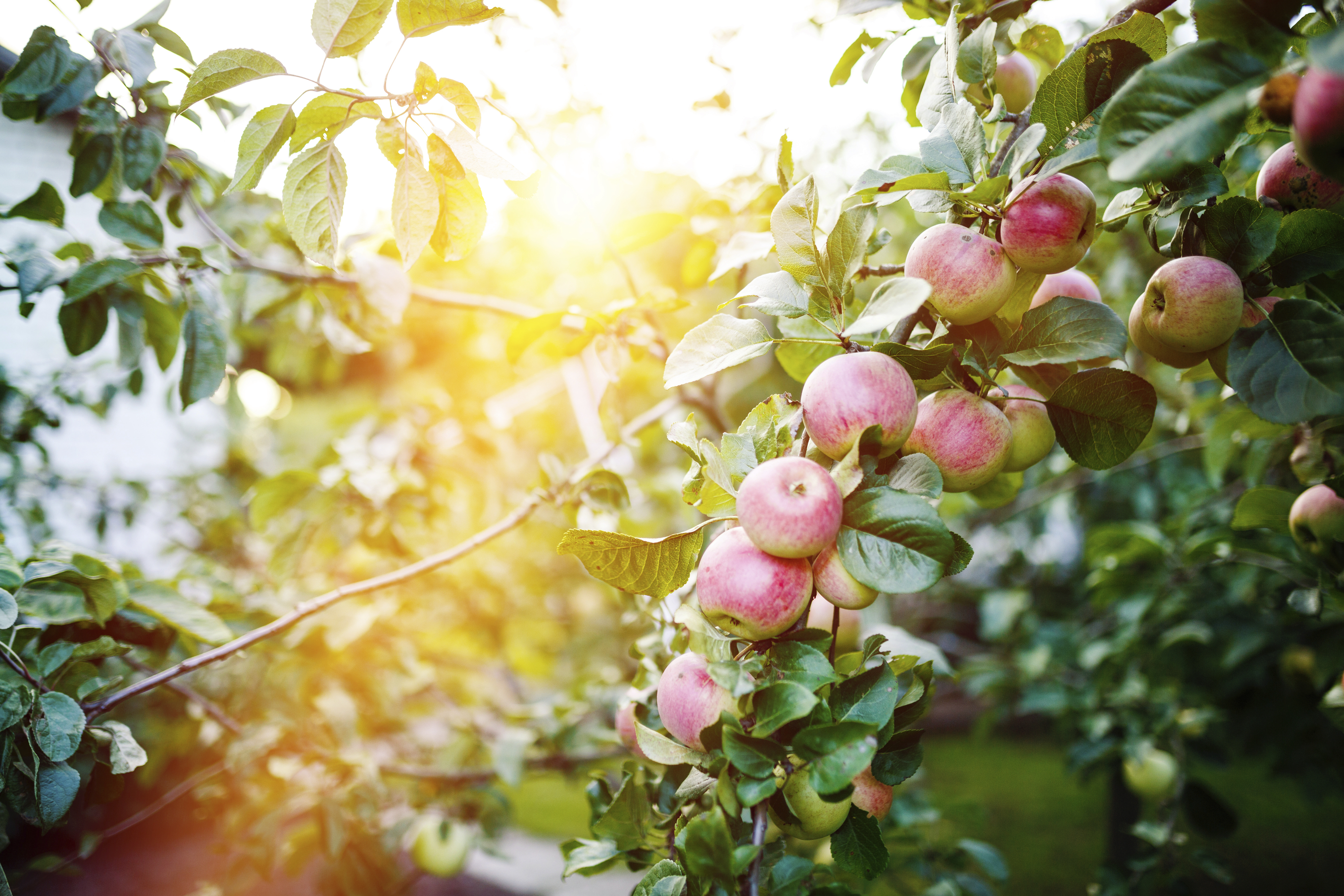 Top 5 Le Trees Sold Through The Arbor Day Tree Nursery