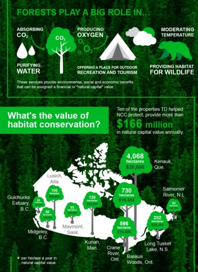 Can We Put a Price on Forest Conservation? TD and Nature