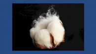 Making Cotton More Sustainable—Solutions from Outer Space?