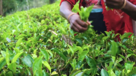 The Republic of Tea is Transforming Teatime Into a Positive Force for Good