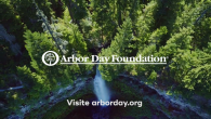 VIDEO: See What the Arbor Day Foundation Is Doing to Restore Forests