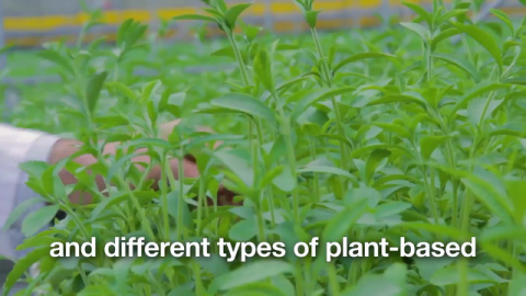 VIDEO | Sustainable Ingredients are the Future of Personal Care