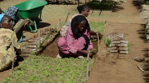 VIDEO | Landscape Restoration in Ethiopia Brings Watershed to Life