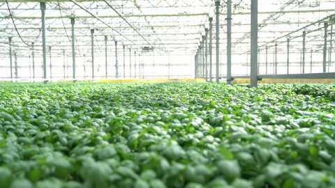 VIDEO - Behind the Mark: Certified Sustainably Grown Living Herbs