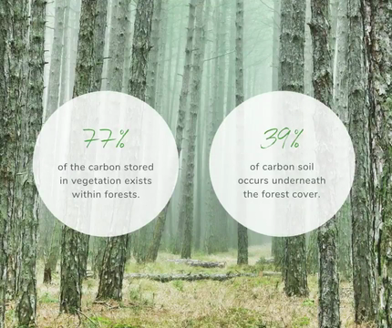 The Future of Forests