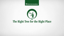 The Right Tree for the Right Place