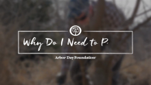 Ask an Arborist: Why Do I Need to Prune?