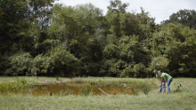How Wetlands Improve Water Quality on University of North Carolina at Greensboro Campus