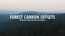 VIDEO: Creating Value for Healthy Forests