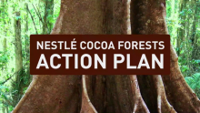 Nestlé Lays out Action Plan to Help End Deforestation and Restore Forests in the Cocoa Supply Chain