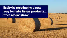 Essity Invests in Wheat Straw Technology to Improve Circularity of Tissue Products