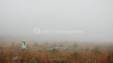 The Arbor Day Foundation's Time for Trees Initiative