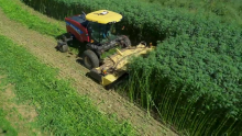 The Renaissance of Industrial Hemp in North America: How New Holland Supports an Evolving Industry.