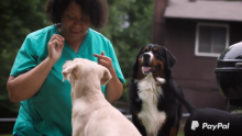 How a Dog Daycare Owner Is Getting Back on Her Feet With a PayPal Empowerment Grant