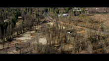Arbor Day Foundation Launches Wildfire Restoration Collaborative