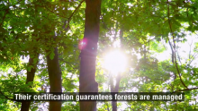 Strides in Sustainable Forestry