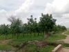 Reforestation projects in Cameroon