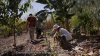 Land Restoration Through Agroforestry in Brazil