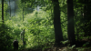 Promoting Sustainably-Managed Woodlands One Parcel at a Time