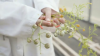 Plant Breeders Turn to The Seed Library for Genetic Resources