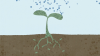 Regenerative Agriculture is a Hopeful Solution to Climate Change