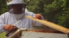 VIDEO | The Buzz on Beekeeping at Mohawk's Glasgow, VA Manufacturing Facility