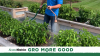Growing in Kindness: How ScottsMiracle-Gro Associates GroMoreGood Through the Simple Act of Gardening