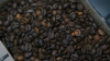 Watch Energea's Sustainability Spotlight Series: Omar Coffee Sourcing from Sustainable Farmers