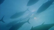 Call2Action and Oceana Team Up to Save Bluefin Tuna