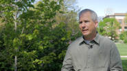 Ask an Arborist: How Do I Check for Tree Pests?