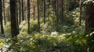 HP Eco-Partners: 6 Nonprofits Helping Global Businesses Go Green