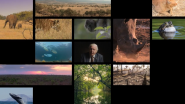 United Nations Development Programme Announces 'The Lion's Share' Fund With Founder Finch and Founding Partner Mars to Tackle Crisis in Wildlife Conservation and Animal Welfare