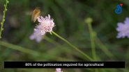 OFA Supports Bees in France