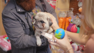 Video | Retail Revival Spotlight: A Pet Store with a Purpose