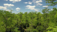 World's Fifth Oldest Tree Found in North Carolina