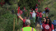 Arbor Day Foundation Celebrates 1-Year Anniversary of the Evergreen Alliance