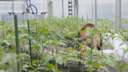 ScottsMiracle-Gro is Helping the World Grow a Little More Extraordinary