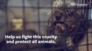 What Can You Do to Help the HSUS End the Horrific Conditions and Cruelty at Puppy Mills and Pet Stores Nationwide?