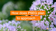 PSEG Joins UN 'Race To Zero' Initiative, Commits to Setting Science-Based Emissions Reduction Targets